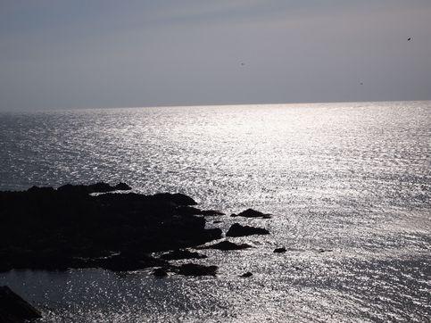 スカイ岬 5月上旬   5月上旬 ▲ページのトップへ戻る 礼文島の魅力(写真...  コリンシア